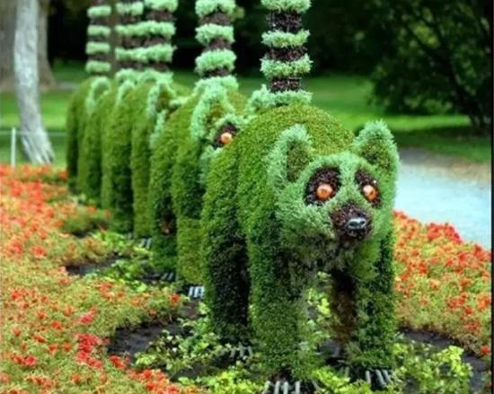 五色草浣熊造型