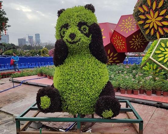 五色草熊猫造型