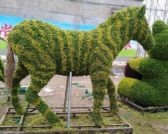 五色草斑马造型
