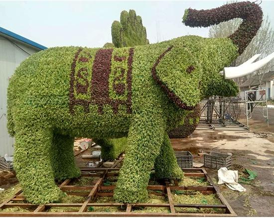 五色草大象造型