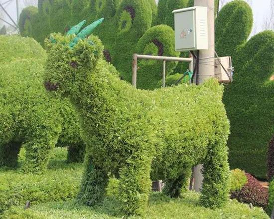 五色草动物造型