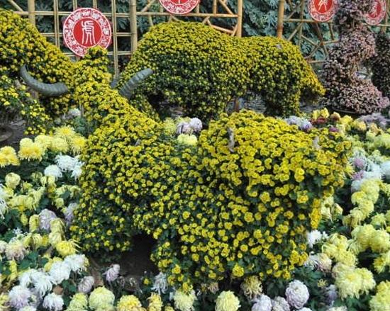 江苏菊花造型