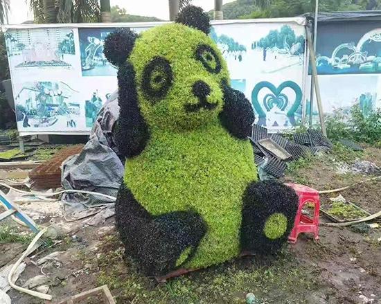上海熊猫五色草案例