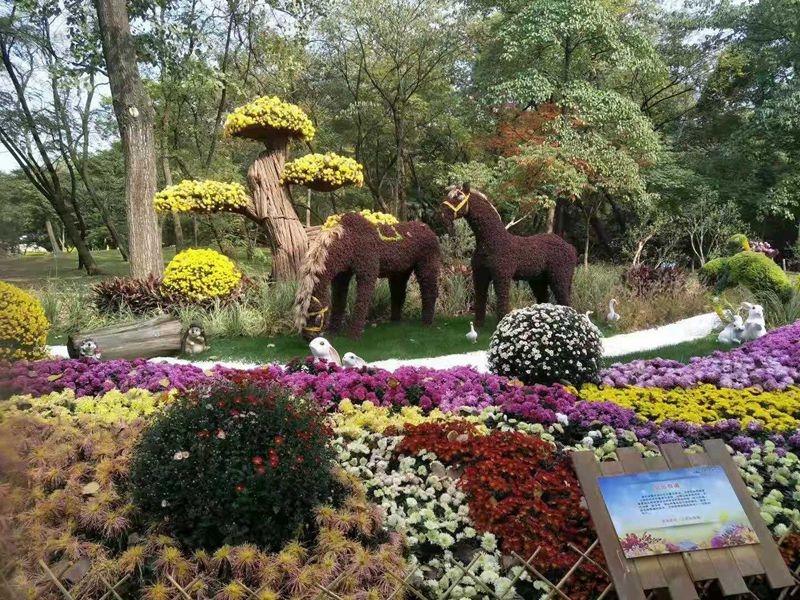 北京五色草造型