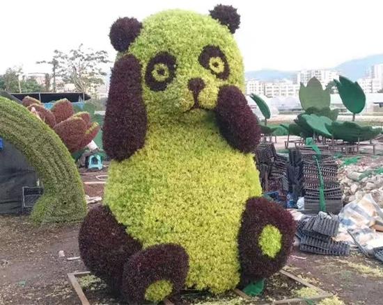 熊猫五色草造型